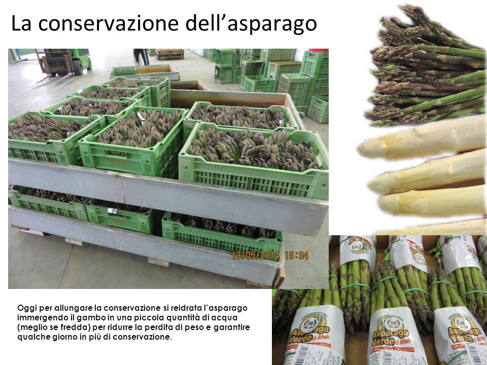 La conservazione dell'asparago Oggi per allungare la conservazione si reidrata l'asparago immergendo il gambo in una piccola quantità di acqua (meglio