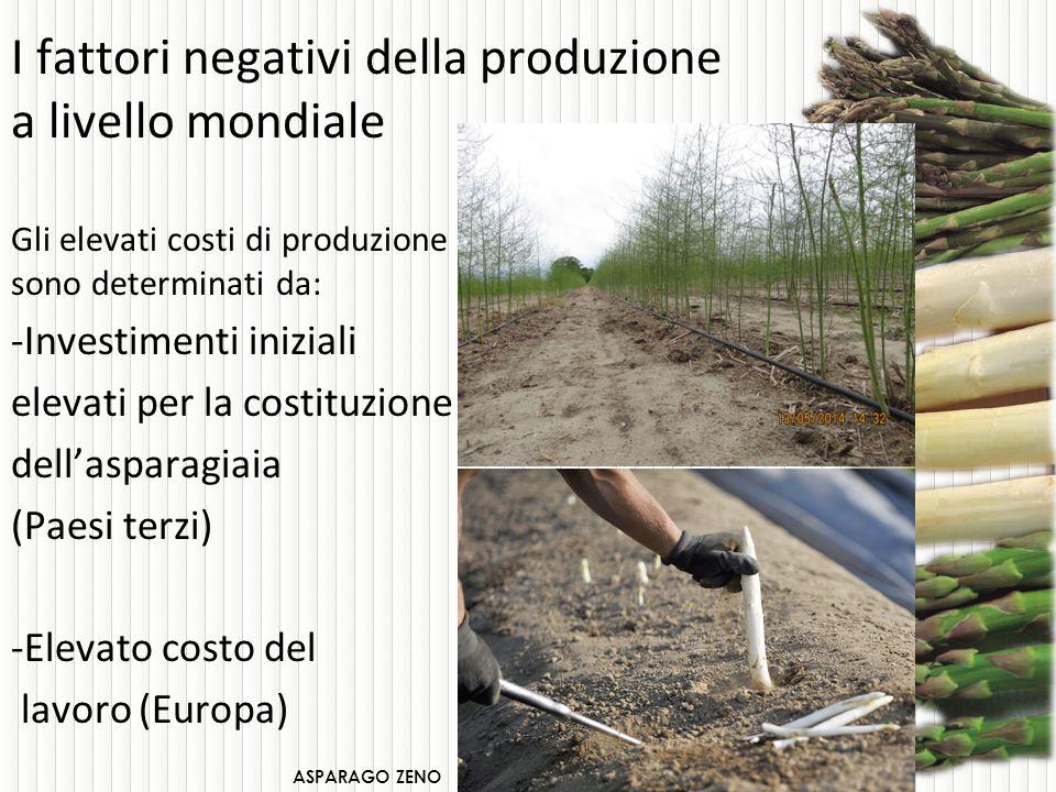 Sono oltre 25 anni che in Italia si pratica la raccolta agevolata dell'Asparago.