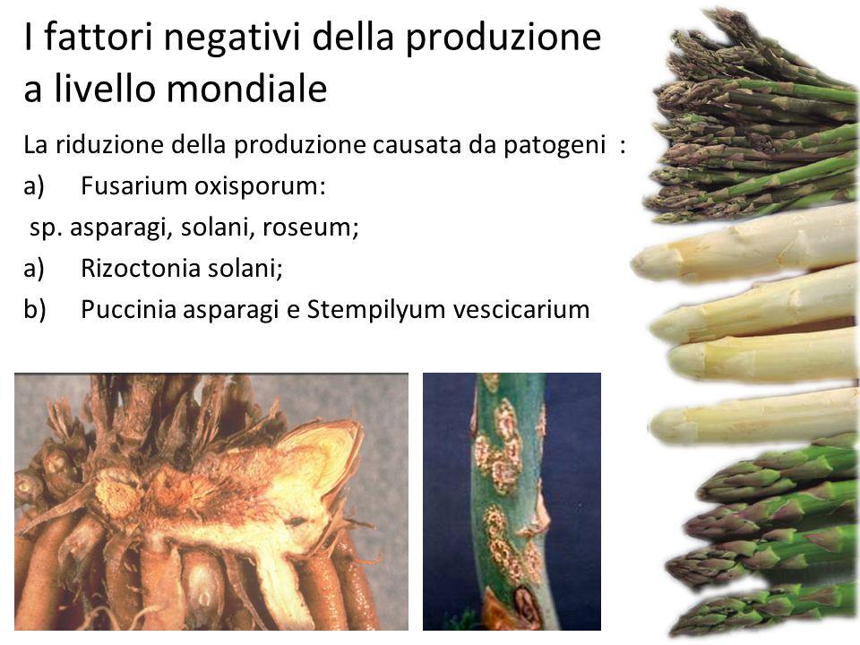 I fattori negativi della produzione a livello mondiale La riduzione della produzione causata da patogeni : a)Fusarium oxisporum: sp. asparagi, solani,