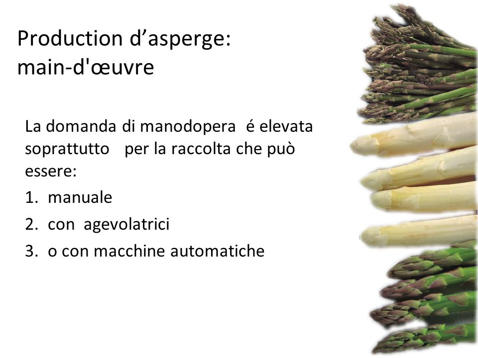 Produzione d'asparago verde: il costo del lavoro per la raccolta Le rese medie nella raccolta: 1) Manuale 8-14 kg / h 2) con agevolatrici 20-30 kg / h 3) Raccolta automatica ( più idonee per asparago Bianco ) Raccolta in serra e trasporto manuale dopo la raccolta