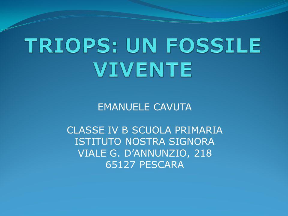 EMANUELE CAVUTA CLASSE IV B SCUOLA PRIMARIA ISTITUTO NOSTRA SIGNORA VIALE G. D'ANNUNZIO, 218 65127 PESCARA