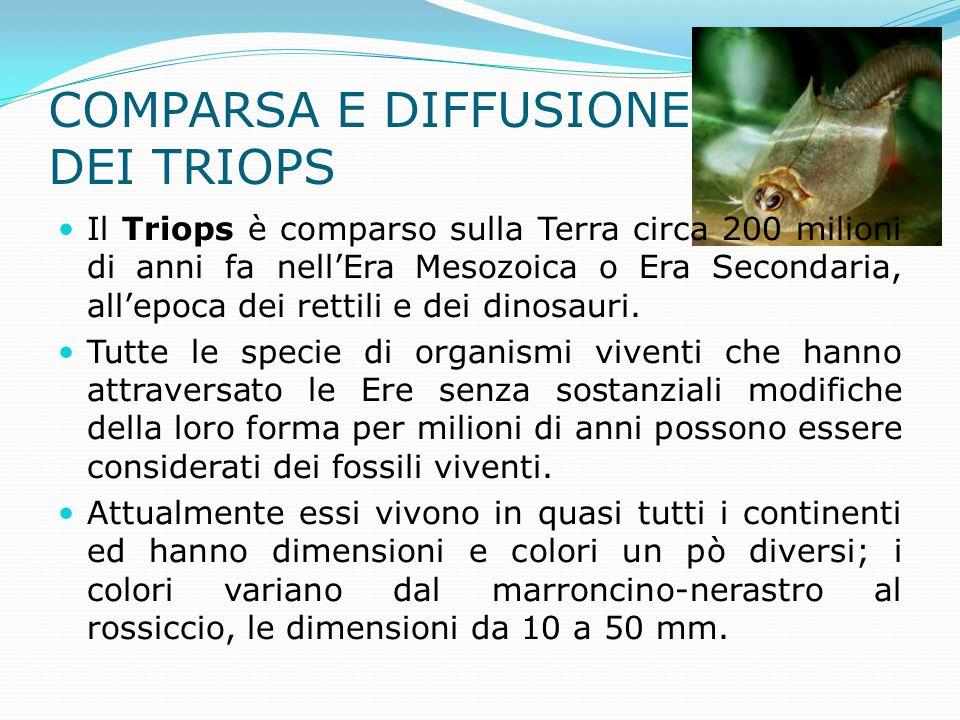 Il Triops è comparso sulla Terra circa 200 milioni di anni fa nell'Era Mesozoica o Era Secondaria, all'epoca dei rettili e dei dinosauri. Tutte le spe