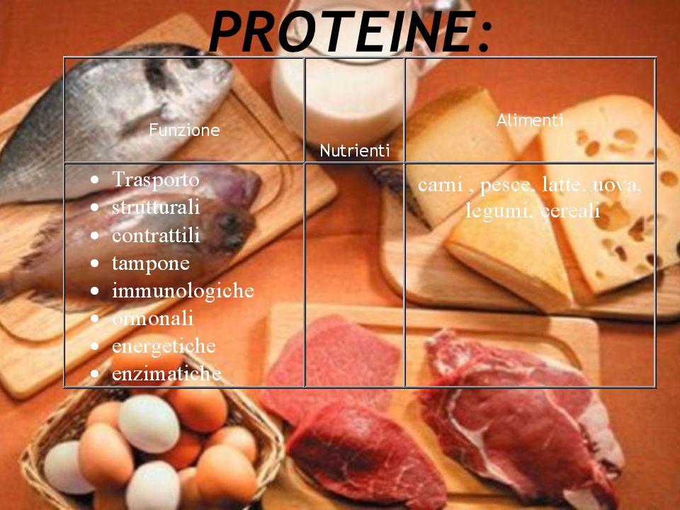PROTEINE: