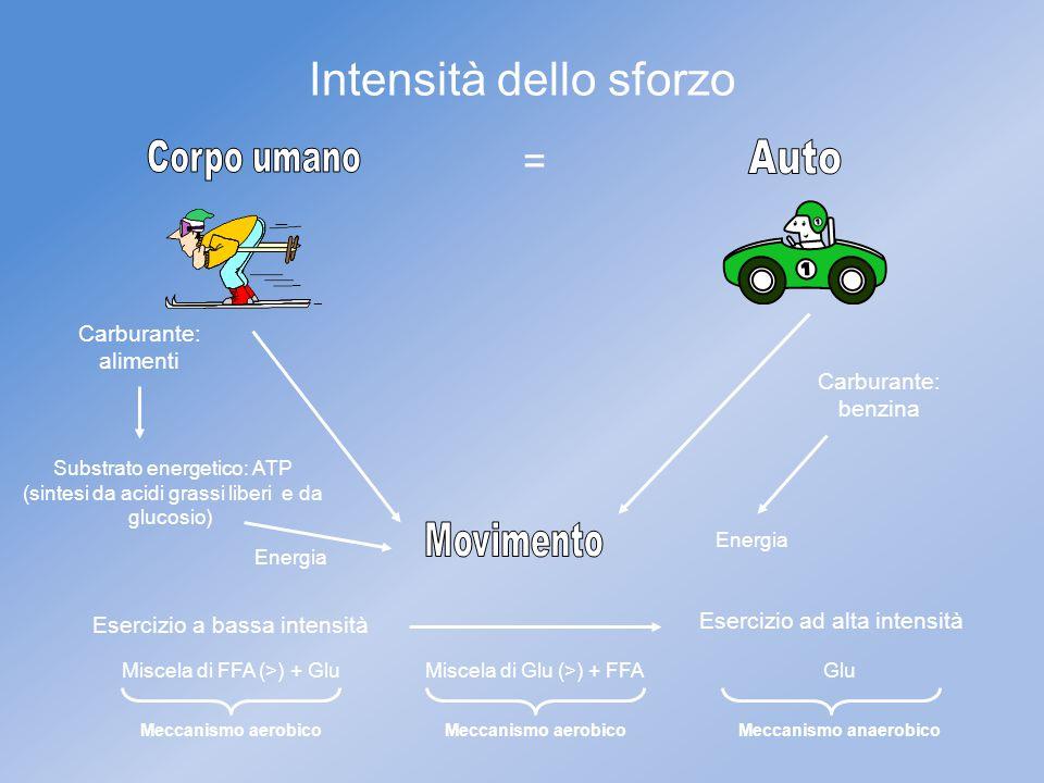 Intensità dello sforzo = Carburante: alimenti Substrato energetico: ATP (sintesi da acidi grassi liberi e da glucosio) Carburante: benzina Esercizio a