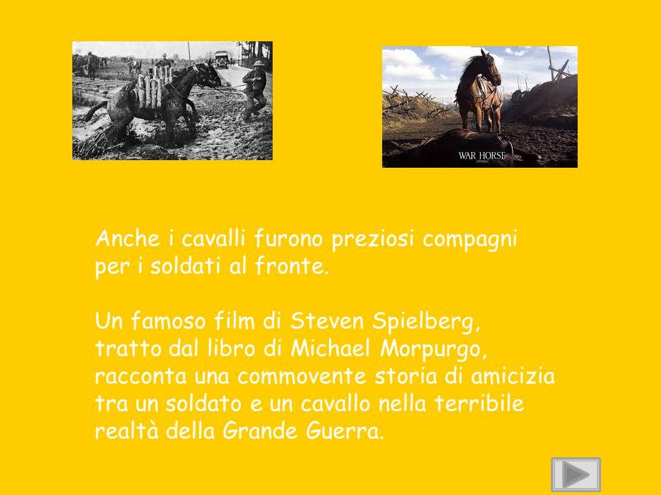Anche i cavalli furono preziosi compagni per i soldati al fronte. Un famoso film di Steven Spielberg, tratto dal libro di Michael Morpurgo, racconta u
