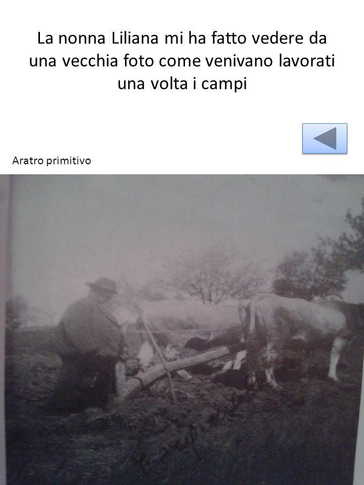 La nonna Liliana mi ha fatto vedere da una vecchia foto come venivano lavorati una volta i campi Aratro primitivo
