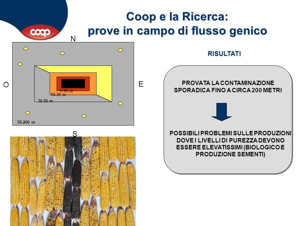 Coop e la Ricerca: prove in campo di flusso genico N S O E 1-10 m 10-30 m 30-50 m 50-200 m PROVATA LA CONTAMINAZIONE SPORADICA FINO A CIRCA 200 METRI
