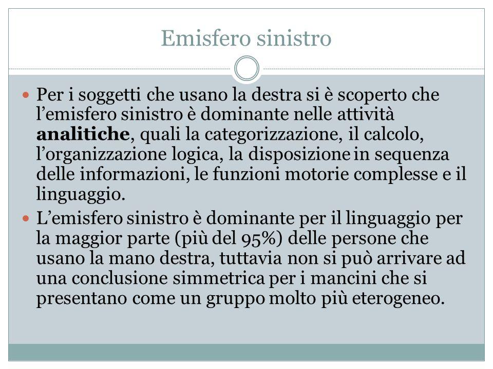 Emisfero sinistro Per i soggetti che usano la destra si è scoperto che l'emisfero sinistro è dominante nelle attività analitiche, quali la categorizzazione, il calcolo, l'organizzazione logica, la disposizione in sequenza delle informazioni, le funzioni motorie complesse e il linguaggio.