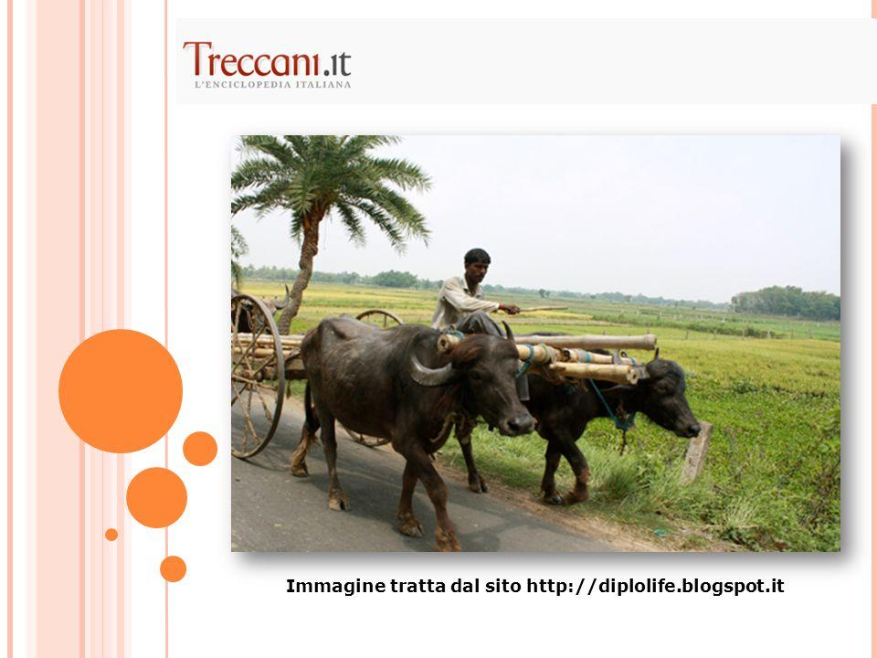 Immagine tratta dal sito http://diplolife.blogspot.it