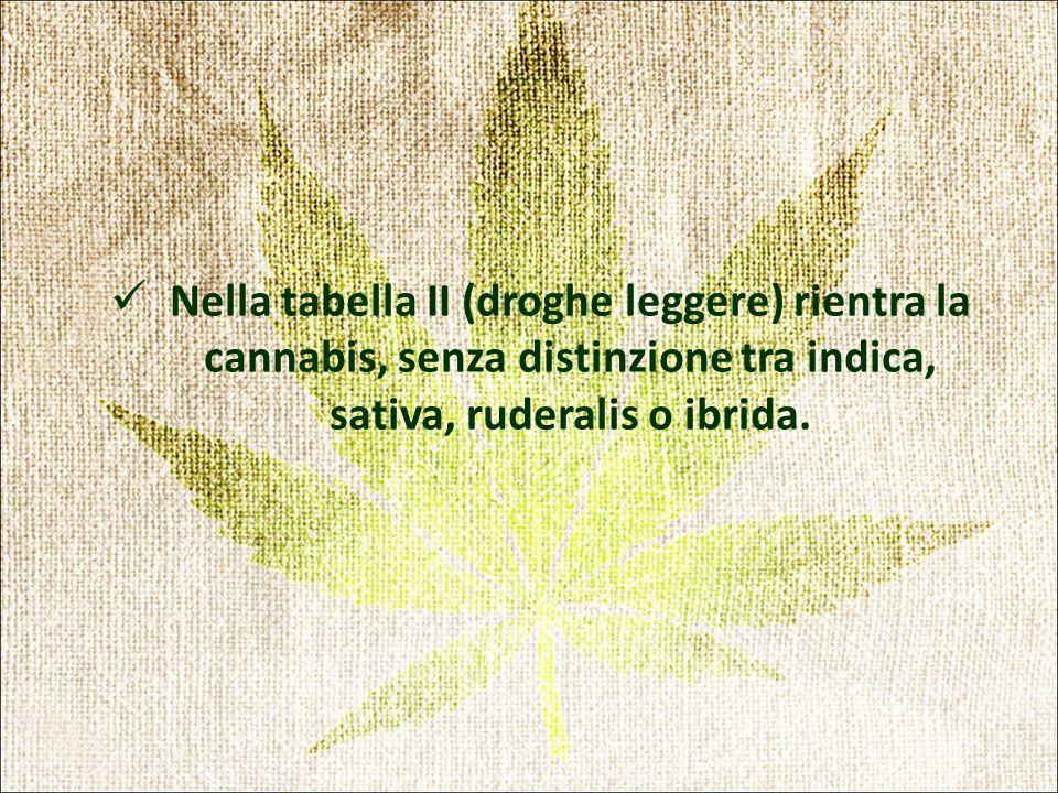 Nella tabella II (droghe leggere) rientra la cannabis, senza distinzione tra indica, sativa, ruderalis o ibrida.