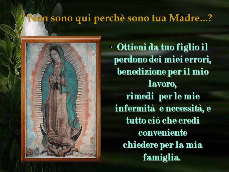 """""""Non sono qui perchè sono tua Madre...? Dacci una prova del tuo amore e bontà e ricevi le nostre preghiere e orazioni. Dacci una prova del tuo amore e"""
