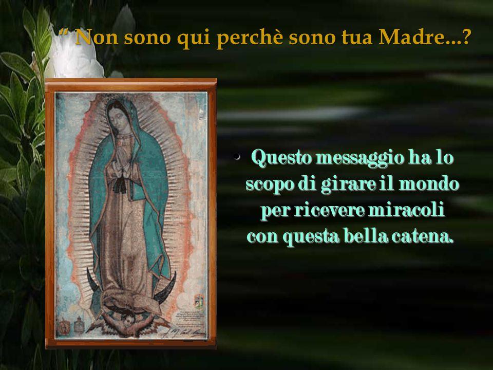 """"""" Non sono qui perchè sono tua Madre...? Cari fratelli, prima di tutto voglio dirvi che la Vergine di Guadalupe è buona e miracolosa e ci accompagna s"""