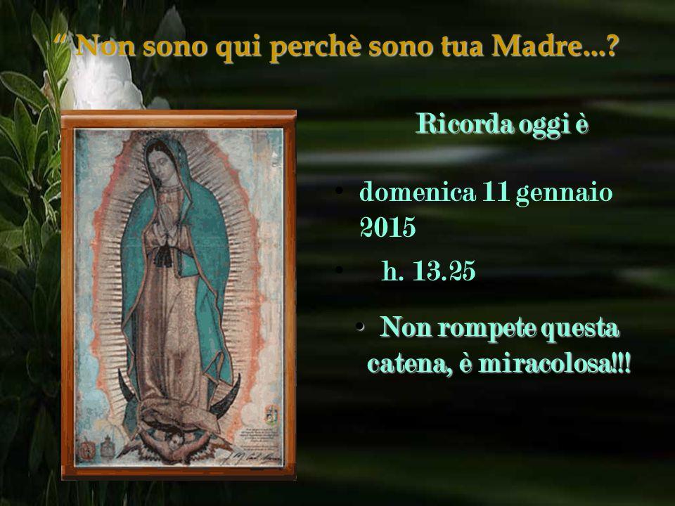 """""""Non sono qui perchè sono tua Madre...? Devi fare quante più copie puoi e in cambio riceverai una prova della Vergine, per quanto impossibile possa se"""