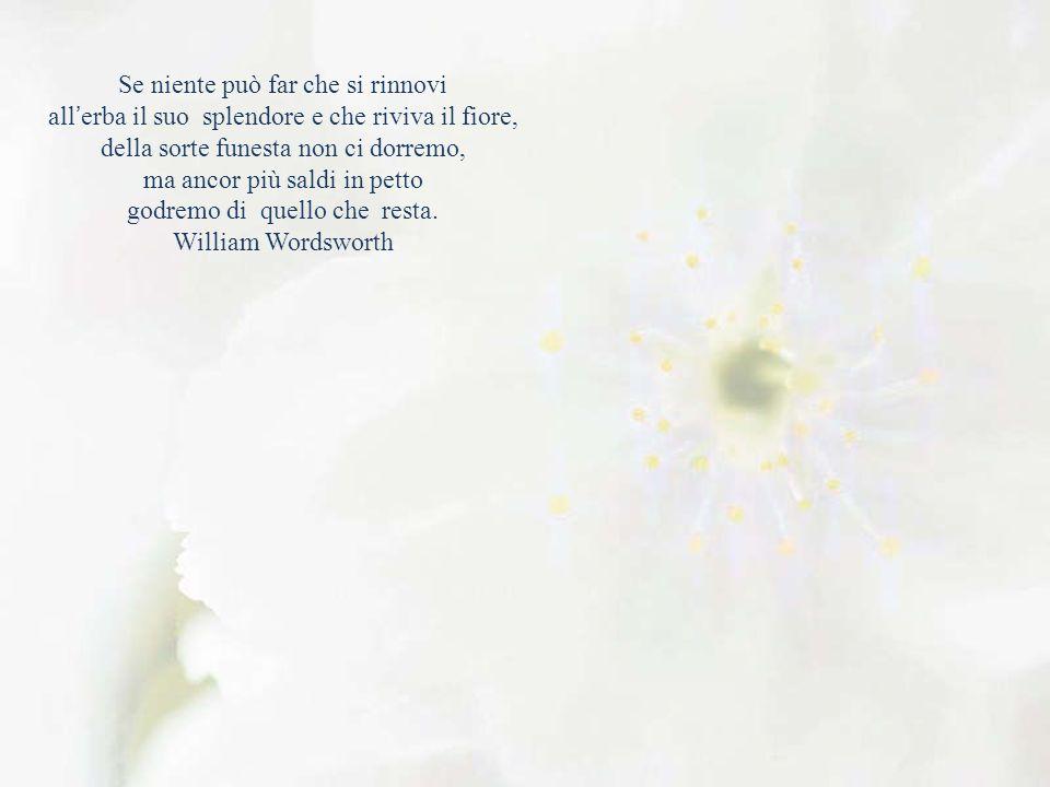 Se niente può far che si rinnovi all'erba il suo splendore e che riviva il fiore, della sorte funesta non ci dorremo, ma ancor più saldi in petto godremo di quello che resta.