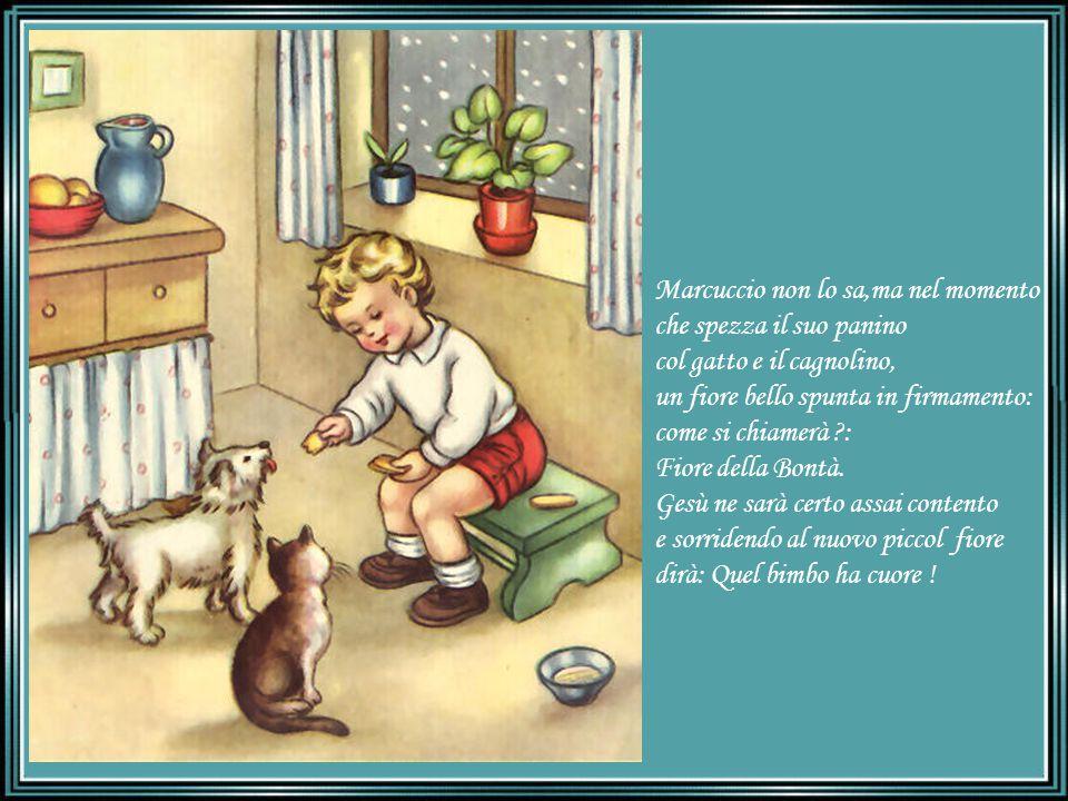 Marcuccio non lo sa,ma nel momento che spezza il suo panino col gatto e il cagnolino, un fiore bello spunta in firmamento: come si chiamerà ?: Fiore della Bontà.