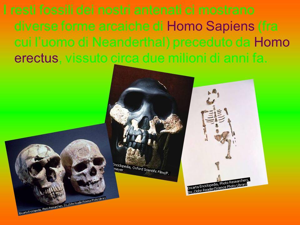 I resti fossili dei nostri antenati ci mostrano diverse forme arcaiche di Homo Sapiens (fra cui l'uomo di Neanderthal) preceduto da Homo erectus, vissuto circa due milioni di anni fa.