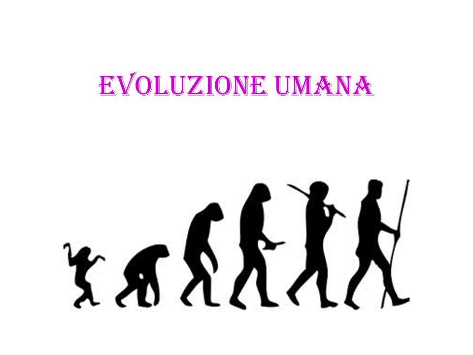 Il processo evolutivo, riconosciuto e attestato, ha evidenziato che la famiglia Hominidae si è evoluta da una popolazione di primati stanziatisi nel Rift africano, progenitori comuni agli scimpanzé circa 5-6 milioni di anni fa e che 2,3-2,4 milioni di anni fa il genere Homo si sia differenziato dall Australopithecus.HominidaeprimatiRift africanoscimpanzéAustralopithecus AUSTRALOPITHECUS