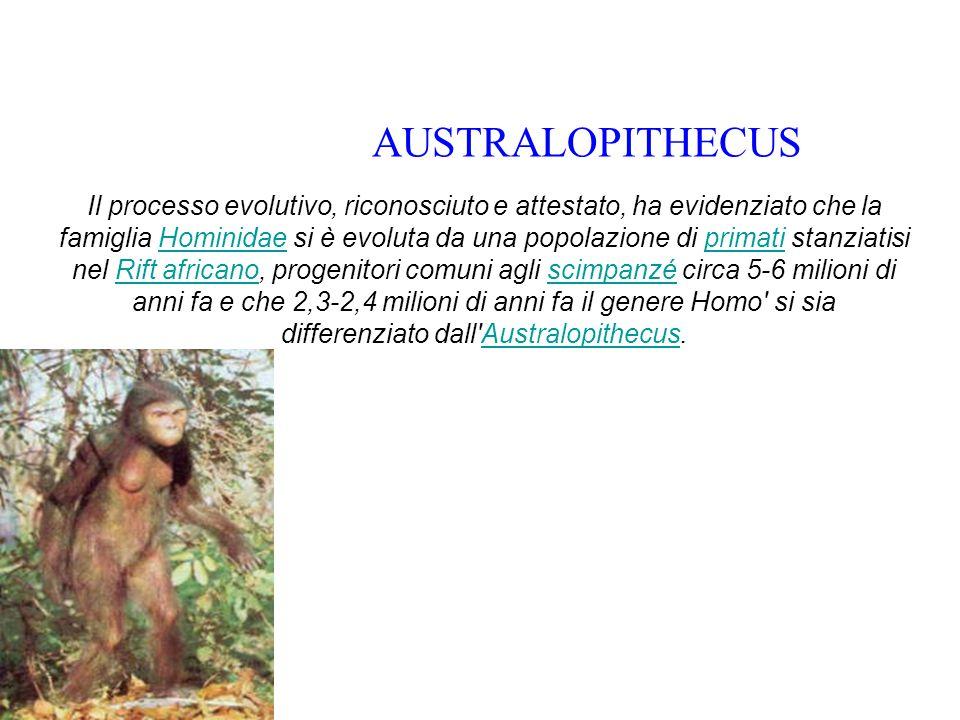 Il processo evolutivo, riconosciuto e attestato, ha evidenziato che la famiglia Hominidae si è evoluta da una popolazione di primati stanziatisi nel R