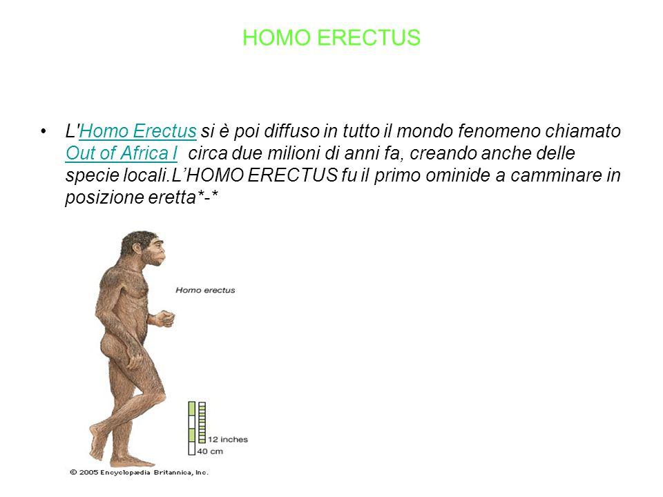 HOMO ERECTUS L'Homo Erectus si è poi diffuso in tutto il mondo fenomeno chiamato Out of Africa I circa due milioni di anni fa, creando anche delle spe