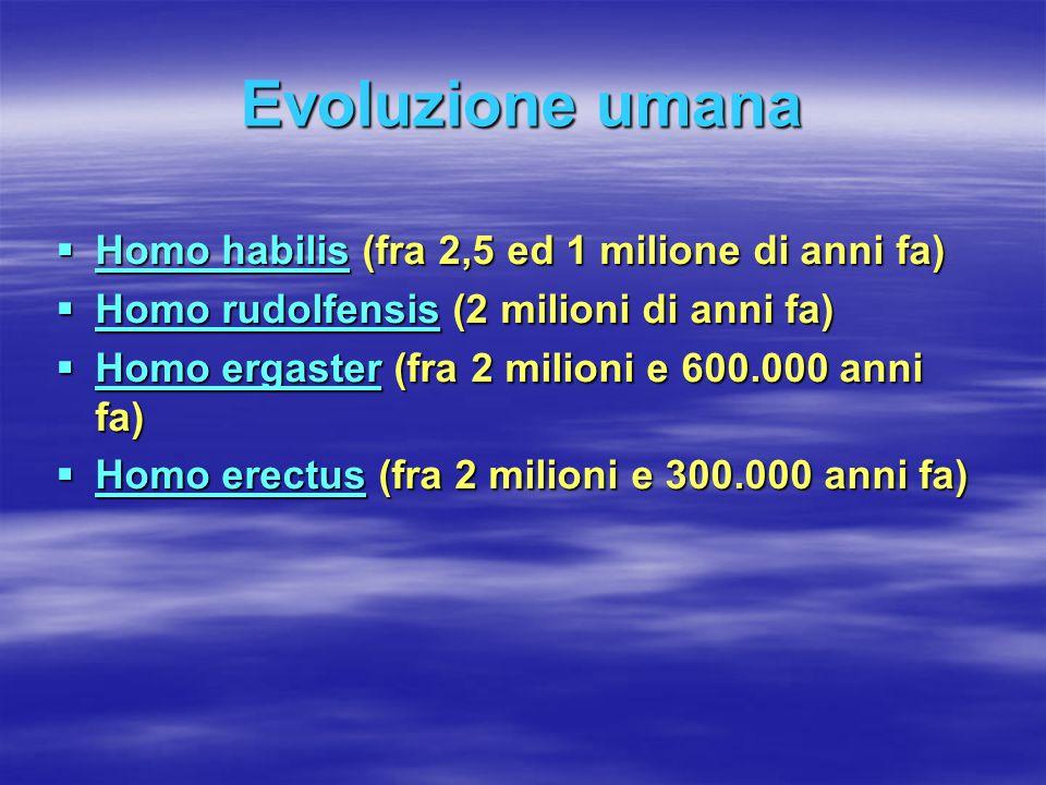  Homo habilis (fra 2,5 ed 1 milione di anni fa) Homo habilis Homo habilis  Homo rudolfensis (2 milioni di anni fa) Homo rudolfensis Homo rudolfensis