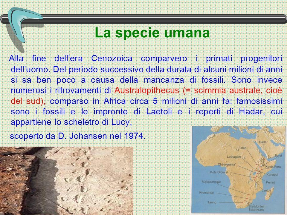 La specie umana Alla fine dell'era Cenozoica comparvero i primati progenitori dell'uomo.