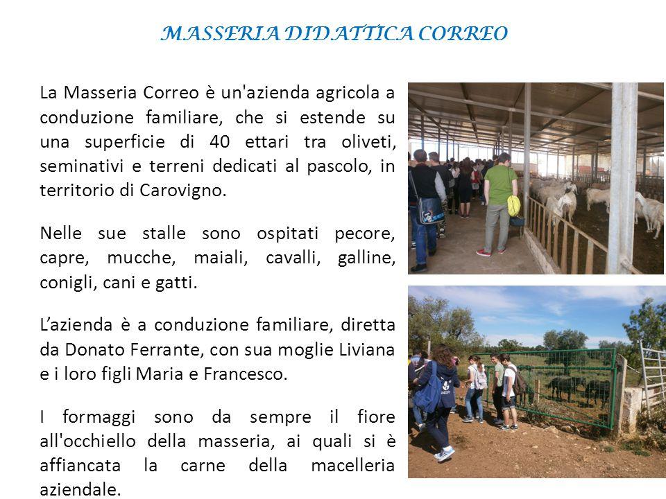 MASSERIA DIDATTICA CORREO La Masseria Correo è un'azienda agricola a conduzione familiare, che si estende su una superficie di 40 ettari tra oliveti,