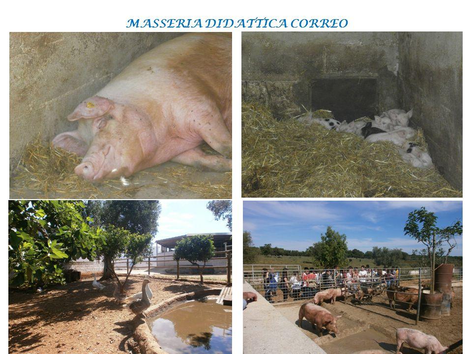 MASSERIA DIDATTICA CORREO 04/06/14