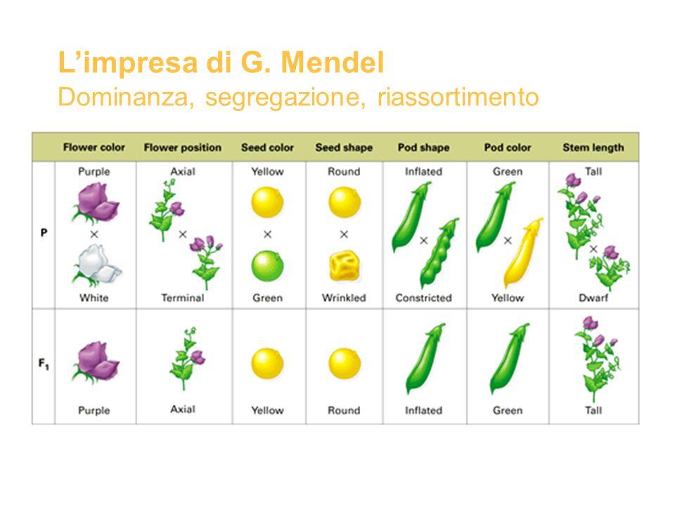 L'impresa di G. Mendel Dominanza, segregazione, riassortimento