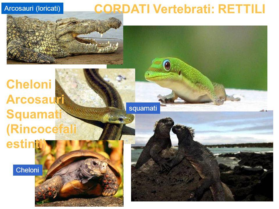 squamati Arcosauri (loricati) CORDATI Vertebrati: RETTILI Cheloni Arcosauri Squamati (Rincocefali estinti)