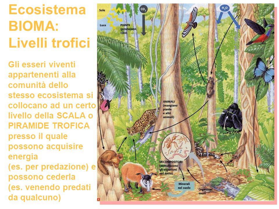 Ecosistema BIOMA: Livelli trofici Gli esseri viventi appartenenti alla comunità dello stesso ecosistema si collocano ad un certo livello della SCALA o