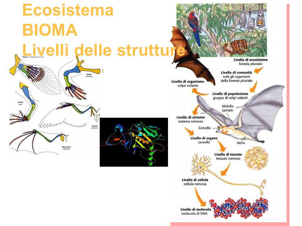 EVOLUZIONE: Le strutture si evolvono in equilibrio con i mutamenti ambientali e con quelli strutturali di tutti gli altri esseri viventi appartenenti