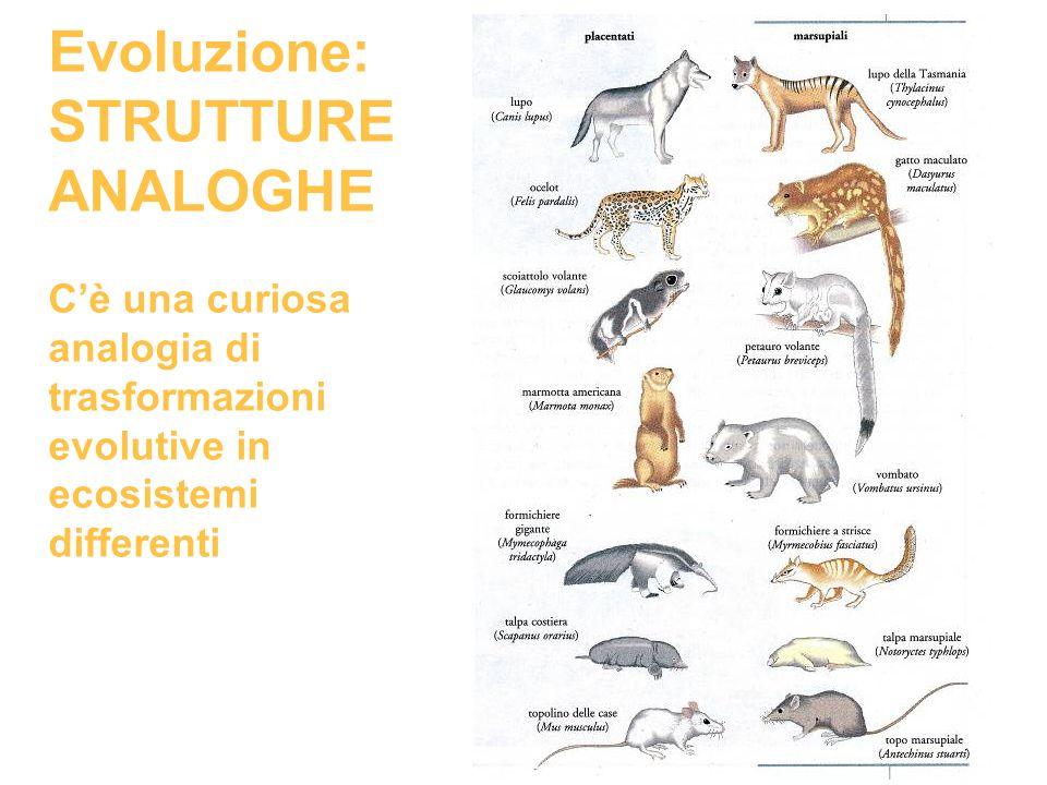 Evoluzione: STRUTTURE ANALOGHE C'è una curiosa analogia di trasformazioni evolutive in ecosistemi differenti