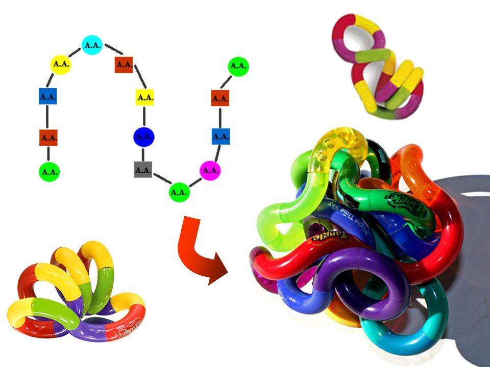 Una PROTEINA La PIRUVATO DEIDROGENASI Realizza una reazione di trasformazione dell'Acido piruvico Dimensioni della FENILALANINA e della ISOLEUCINA rispetto alla proteina Centinaia o migliaia di A.A.