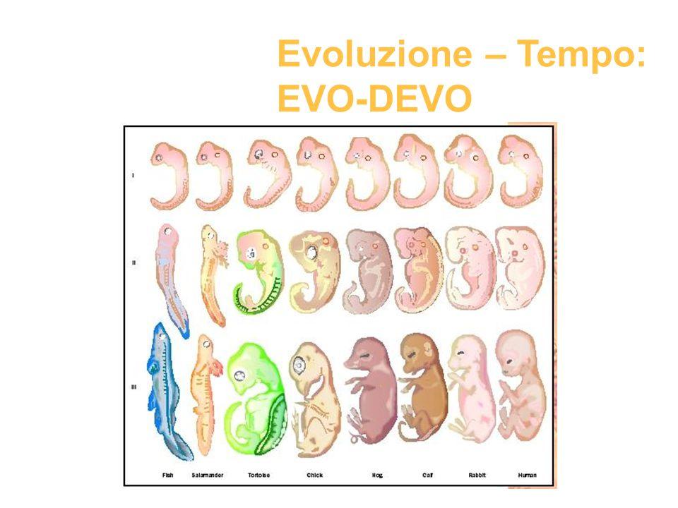 Evoluzione – Tempo: EVO-DEVO