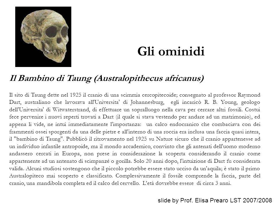 Gli ominidi Il Bambino di Taung (Australopithecus africanus) Il sito di Taung dette nel 1925 il cranio di una scimmia cercopitecoide; consegnato al pr