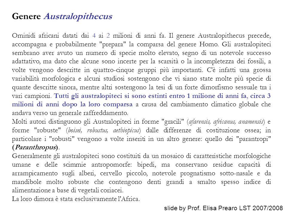 Genere Australopithecus Ominidi africani datati dai 4 ai 2 milioni di anni fa. Il genere Australopithecus precede, accompagna e probabilmente
