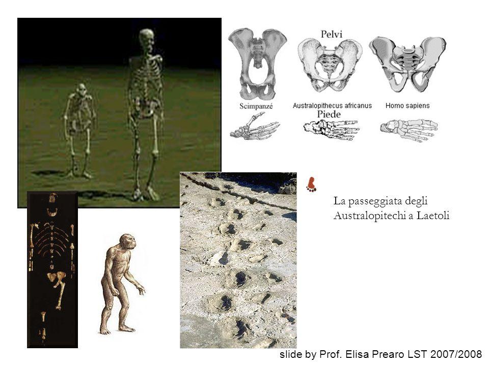 La passeggiata degli Australopitechi a Laetoli slide by Prof. Elisa Prearo LST 2007/2008