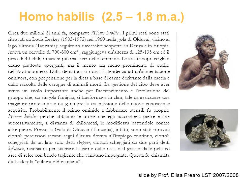 Circa due milioni di anni fa, comparve l'Homo habilis. I primi resti sono stati ritrovati da Louis Leakey (1903-1972) nel 1960 nella gola di Olduvai,