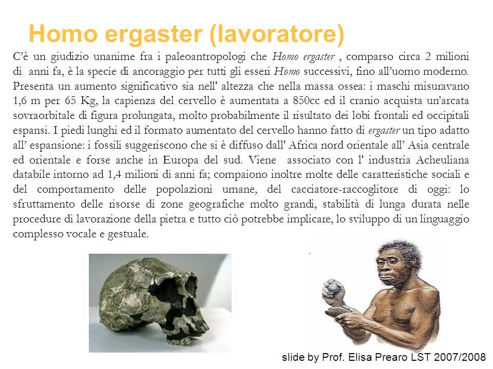 Homo ergaster (lavoratore) C'è un giudizio unanime fra i paleoantropologi che Homo ergaster, comparso circa 2 milioni di anni fa, è la specie di ancor