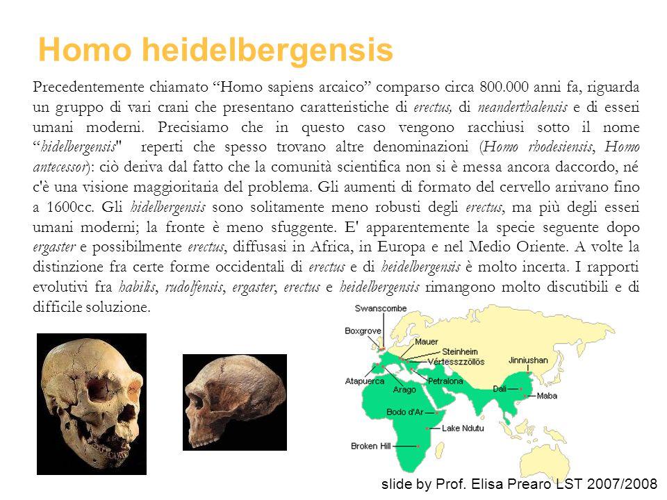 """Precedentemente chiamato """"Homo sapiens arcaico"""" comparso circa 800.000 anni fa, riguarda un gruppo di vari crani che presentano caratteristiche di ere"""