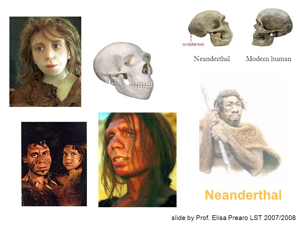 Neanderthal Modern human slide by Prof. Elisa Prearo LST 2007/2008