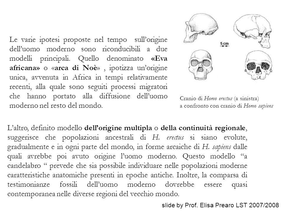 Le varie ipotesi proposte nel tempo sull'origine dell'uomo moderno sono riconducibili a due modelli principali. Quello denominato «Eva africana» o «ar