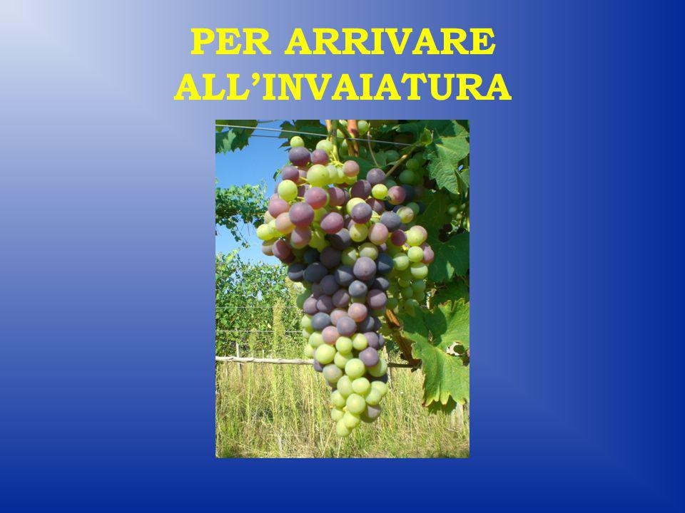 PER ARRIVARE ALL'INVAIATURA