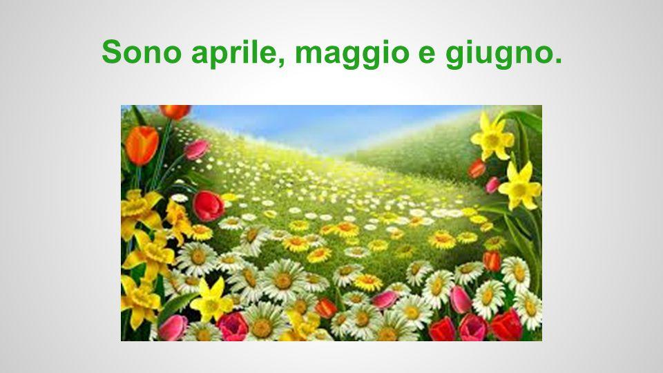 primavera... <- il cielo <- il prato <-il fiore i colori sono verde, giallo, rosa, e celeste.