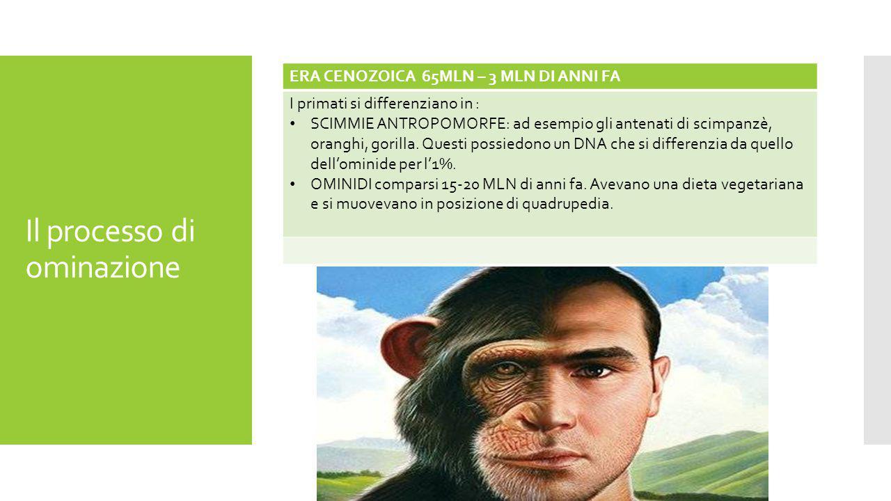 Il processo di ominazione ERA CENOZOICA 65MLN – 3 MLN DI ANNI FA I primati si differenziano in : SCIMMIE ANTROPOMORFE: ad esempio gli antenati di scimpanzè, oranghi, gorilla.