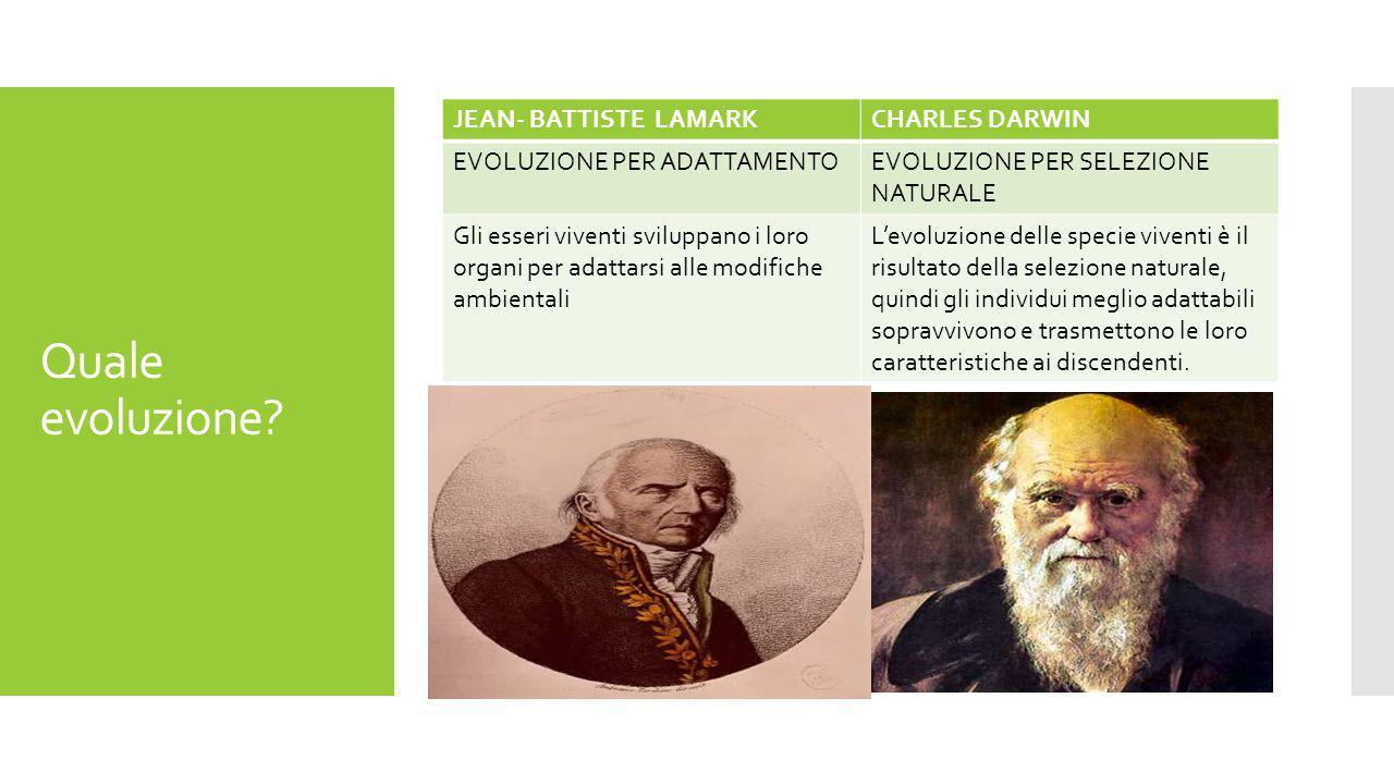 Quale evoluzione.