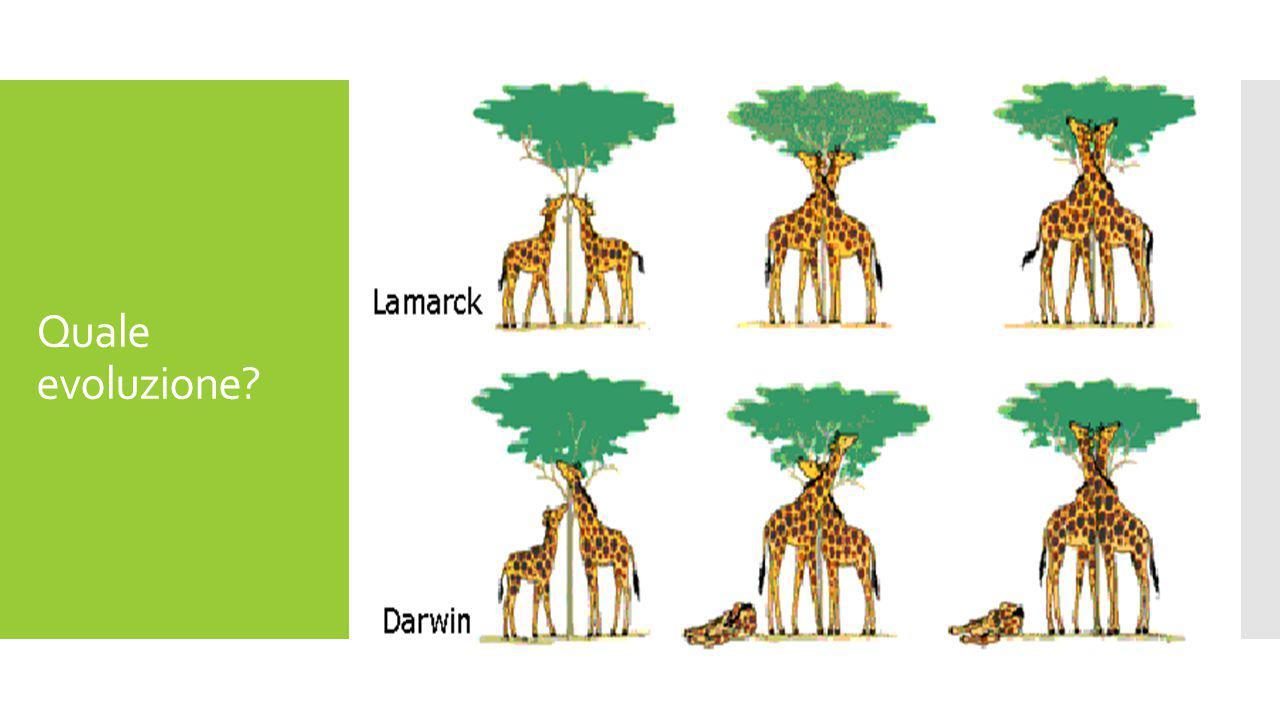 Quale evoluzione?