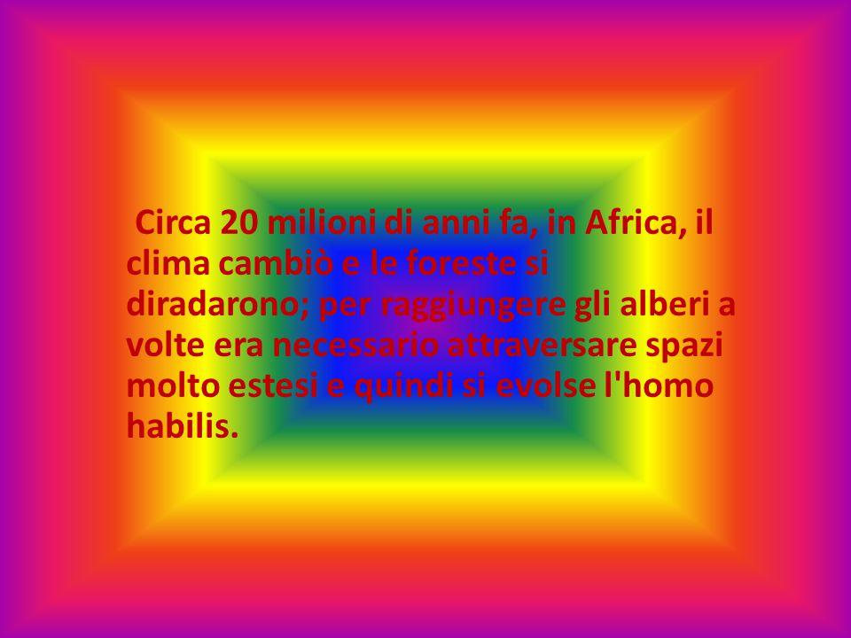 HOMO HABILIS Visse circa due milioni di anni fa in Africa.