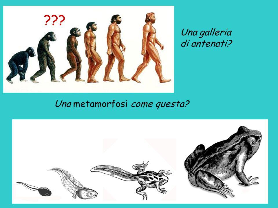 Superfamiglia degli Hominoidi... che fa parte dell'ordine dei Primati