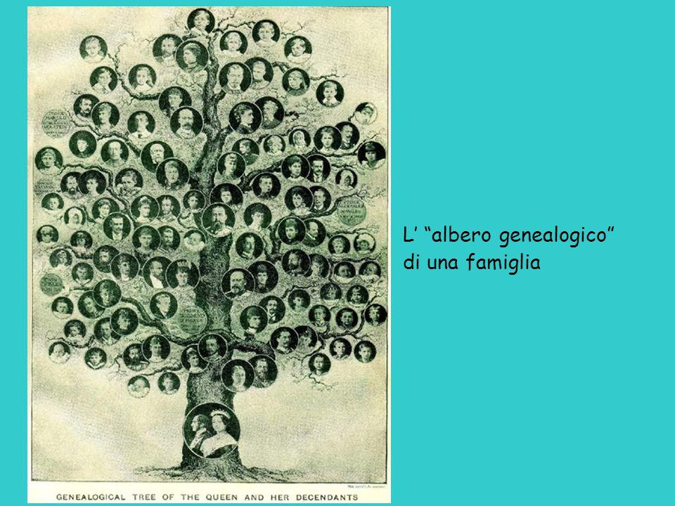   Un albero può rappresentare le parentele tra individui, ma anche tra intere famiglie o tra specie tempo diversità In questo caso non si chiama albero genealogico ma albero filogenetico (specie antenate di specie)